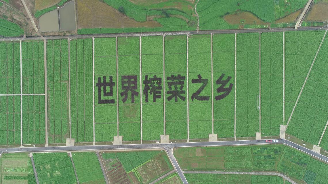 乌江榨菜全球热销150亿包背后的经济密码