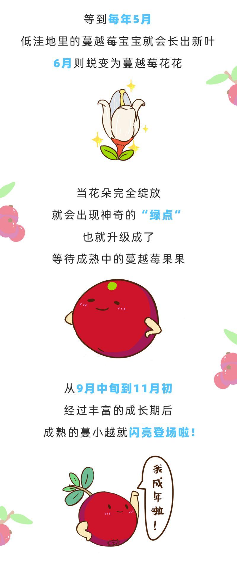 个头小却能量大,这个天然小红果就是蔓越莓