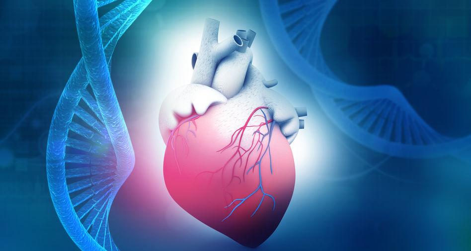 赛立复NADH是什么?与辅酶Q10有什么区别?