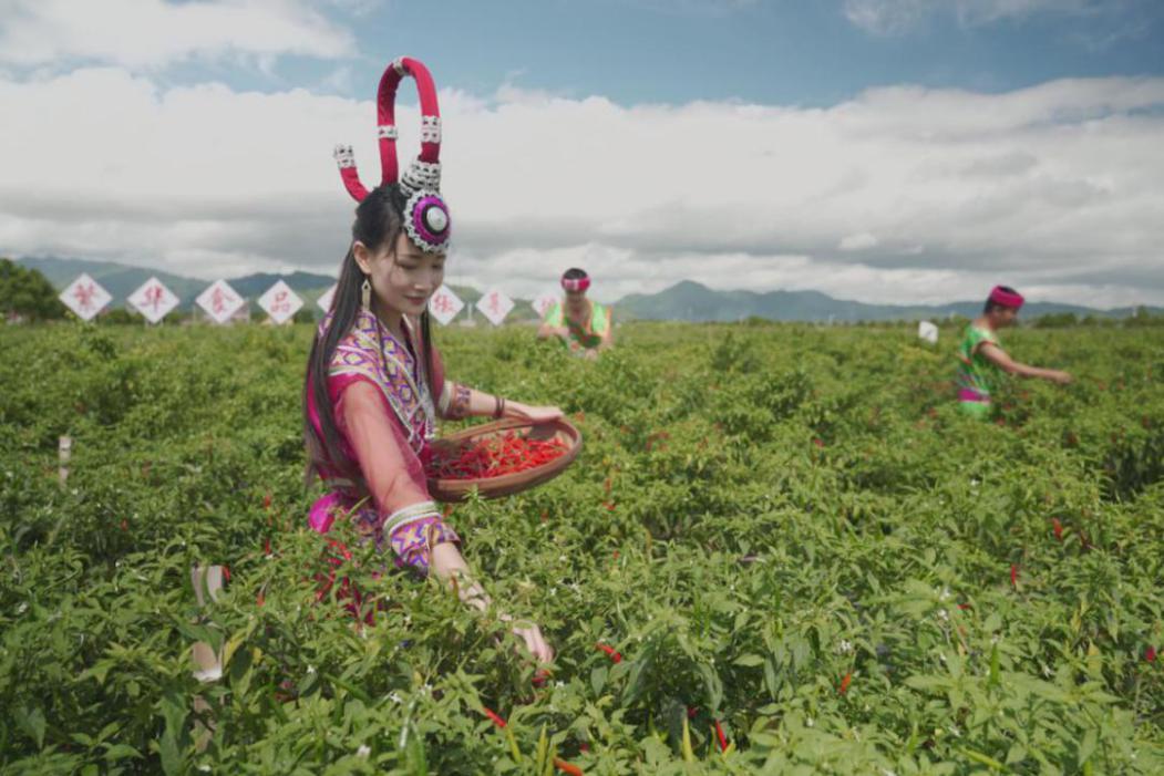 湖南汝城举办第二届辣椒文化旅游节,农旅互联网助推新经济增长