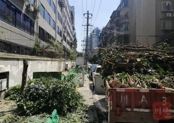 """新游資左有为:成都桂花巷桂花树被野蛮砍伐,""""板子""""该打谁身上?"""