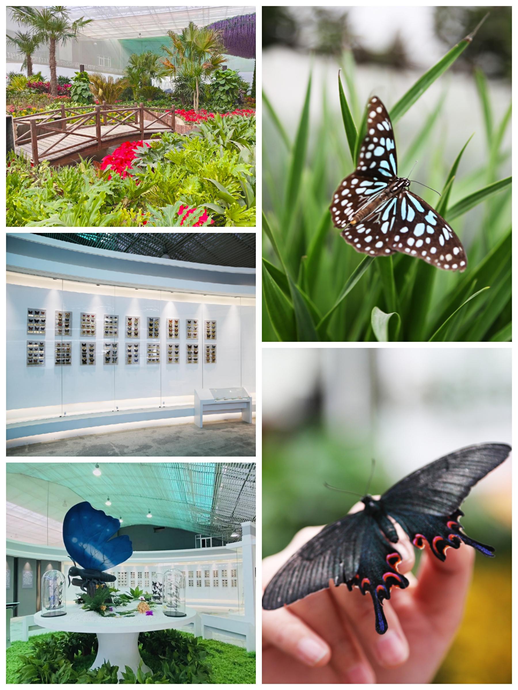 菊满蝶舞·星宿花间 第十二届北京菊花文化节华丽开幕