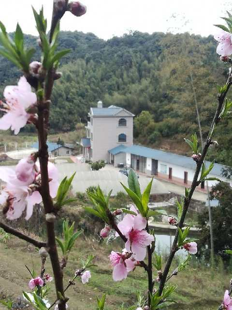 树上有粉色的花  描述已自动生成