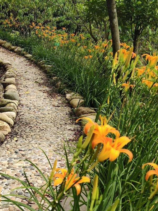 图片包含 户外, 草, 植物, 橙子  描述已自动生成