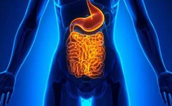 骆驼奶粉的功效与作用,让肠胃问题不再困扰你