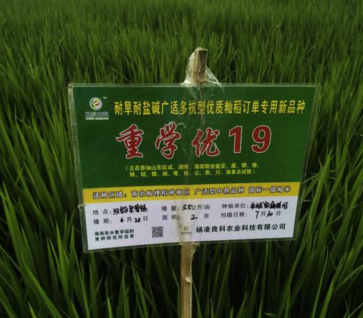 图片包含 草, 户外, 绿色, 前  描述已自动生成