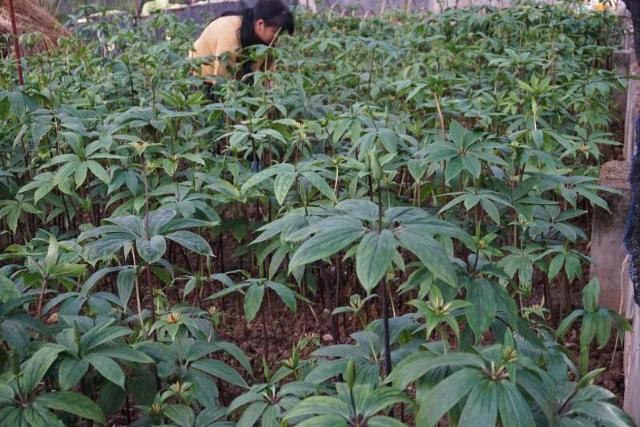树林前的花园里有一些绿色的植物  描述已自动生成