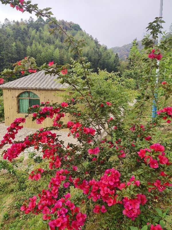 花园里有粉色的花  描述已自动生成