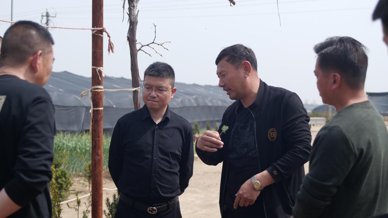 红豆杉协会副会长郝玉彬莅临问苗农业科技有限公司参观考察