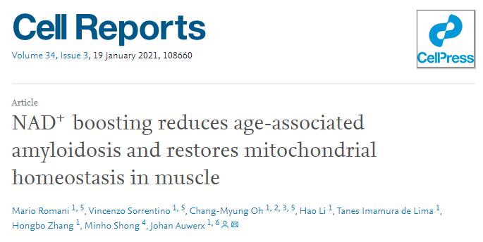 最新研究:NADH、NMN补充NAD+可减缓肌肉退化,恢复身体活力