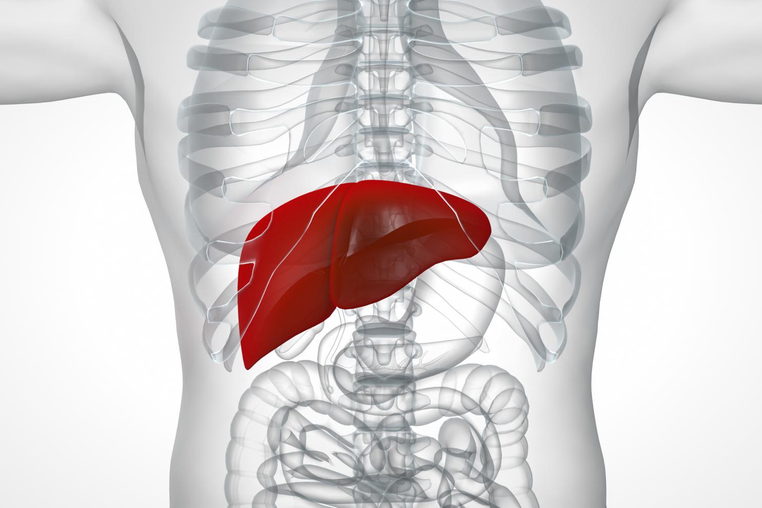 摄图网_401805612_人体肝脏系统(非企业商用)