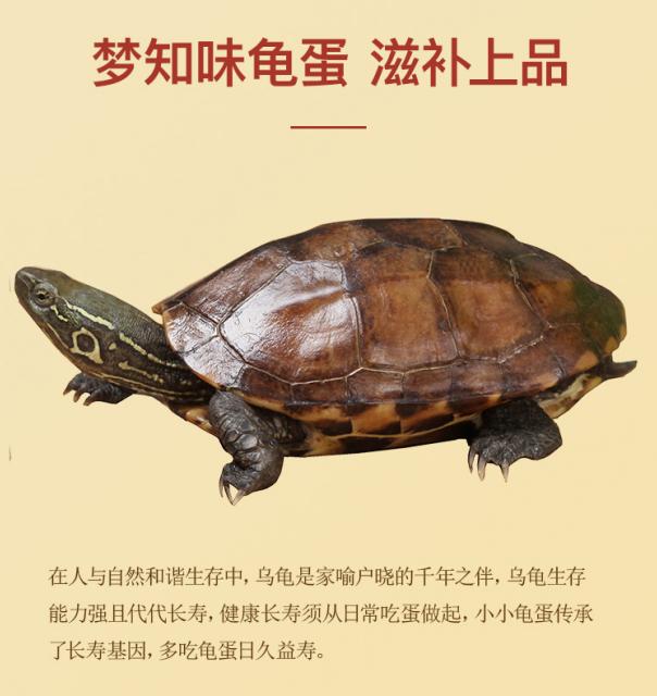 梦知味乌龟蛋:开启福寿密码