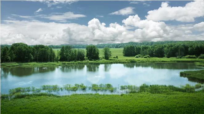 湖边有草地  描述已自动生成