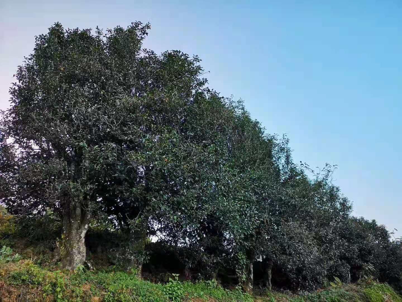 草地上有许多树  描述已自动生成