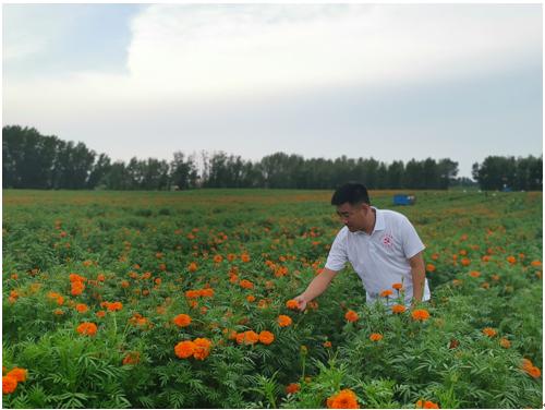 水投集团助力印成种植合作社,让新农村像万寿菊花绽放