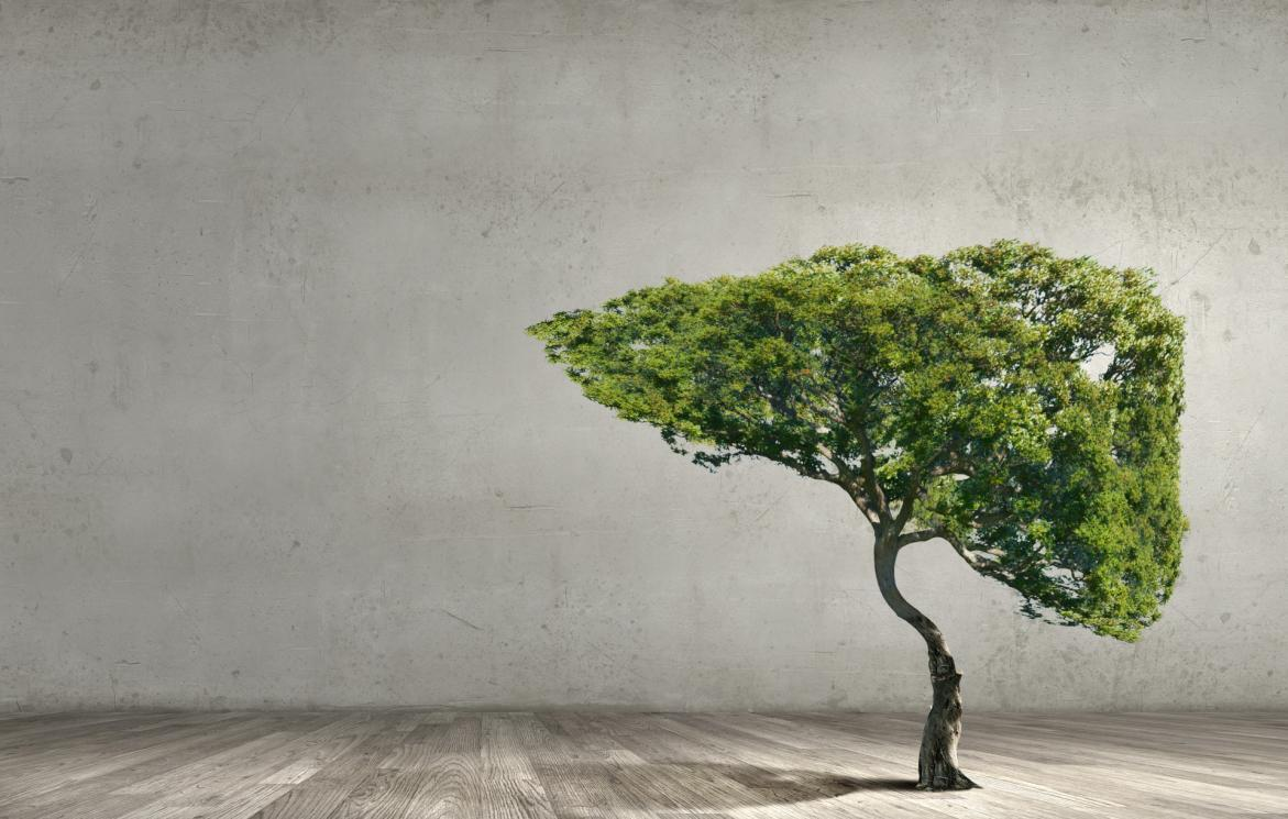 C:\Users\Admin\Desktop\摄图网_300321553_banner_空气污染绿色树的形象,形状像人类的肝脏(非企业商用).jpg摄图网_300321553_banner_空气污染绿色树的形象,形状像人类的肝脏(非企业商用)