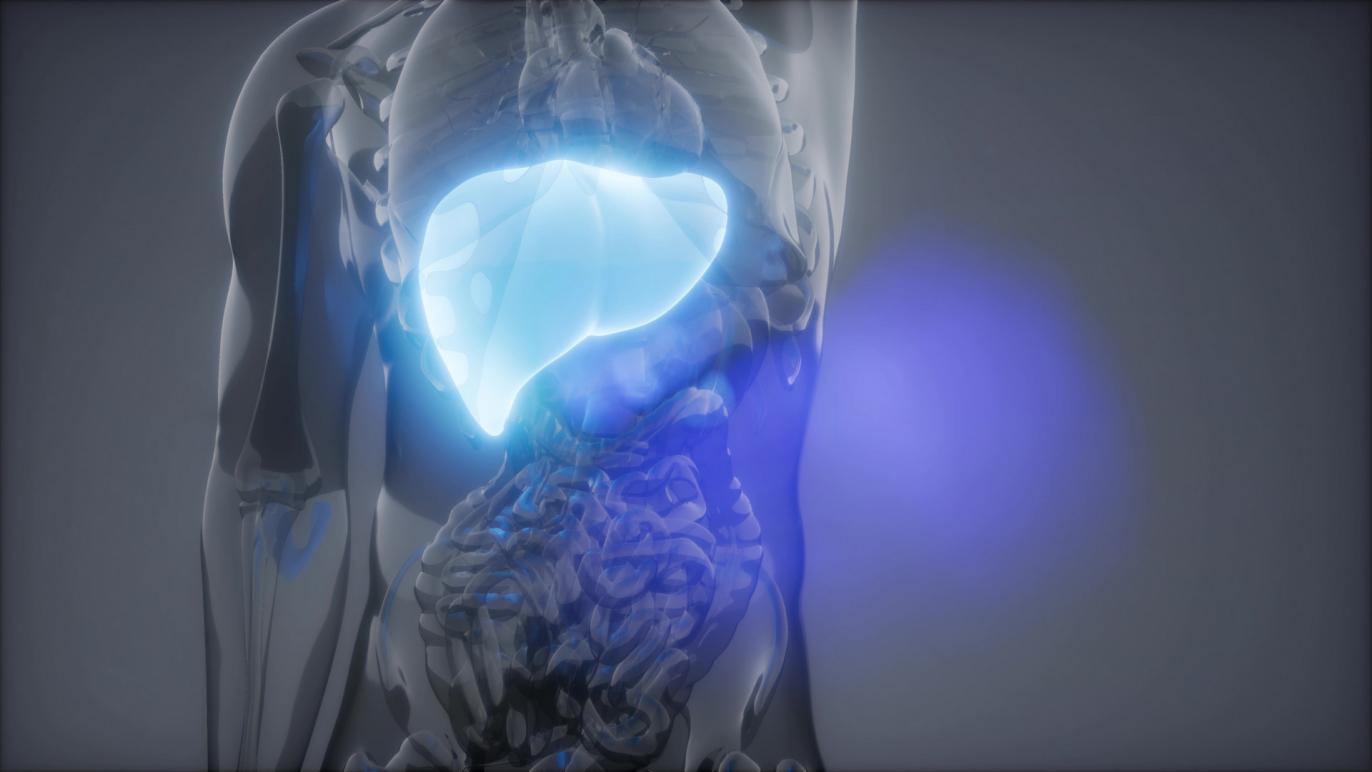 摄图网_300023640_banner_人类肝脏发光的科学解剖扫描人类肝脏放射学检查(非企业商用)