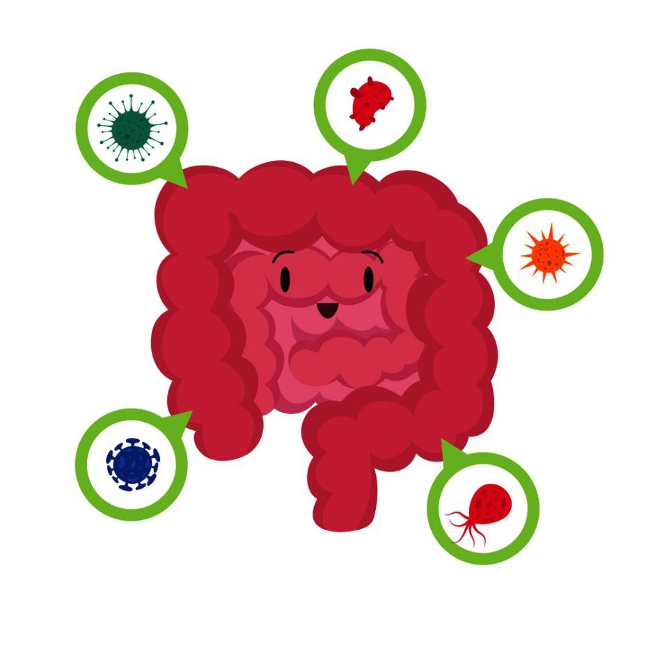 摄图网_302788715_消化肠道和微生物卡通矢量插画(非企业商用)