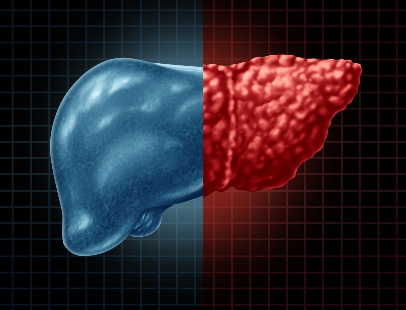 摄图网_301683966_作为消化系统解剖和三维插图样式消化功能重要器官的医学保健概念一部分肝脏和病以及血胃身体是三维插图样式中消化功能的重要器官(非企业商用)