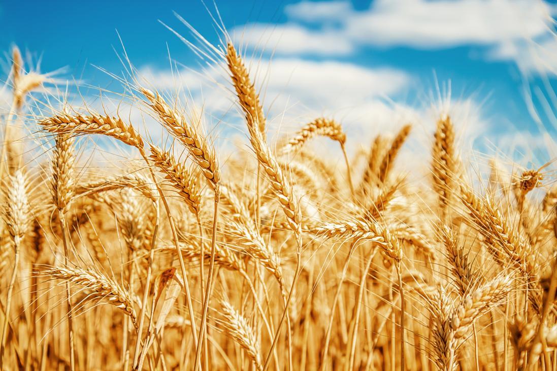 天麦然专访—国际谷物科技协会(ICC)院士卞科教授:好吃的挂面是怎么生产的?