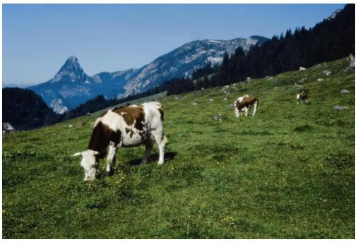 德国HiPP奶粉,扎根自然为宝宝带来纯净健康好营养