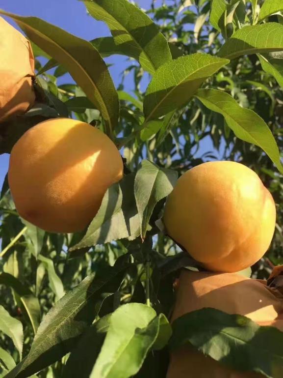 柳城农业农产品整合行业招商运营资源的专业平台